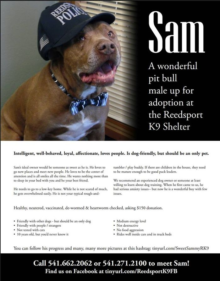 Sweet Sammy Has Spent A Year In The Shelter…