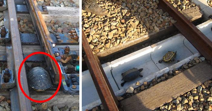 Japan Railways Build Turtle Tunnels Bored Panda