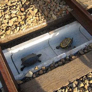 Japan Railways Build Turtle Tunnels