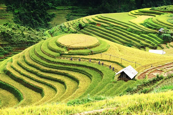 Visiting The Fields