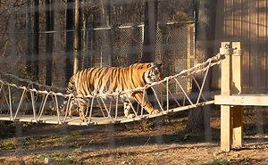 We Built An Indiana Jones Tiger Bridge For An Animal Sanctuary