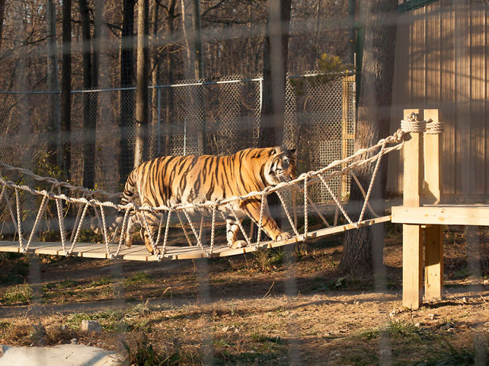 We Built An Indiana Jones Tiger Bridge For An Animal Sanctuary