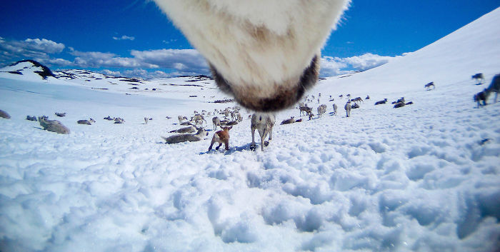 What Happens When You Give A Reindeer A Camera
