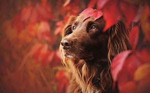 Photographer Captures Soulful Portraits Of Dogs In Austrian Wilderness