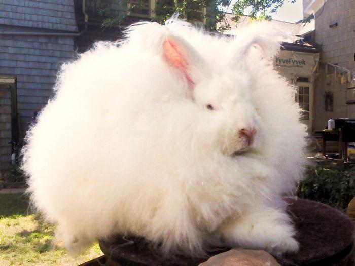 """cats Got Nuttin' On Me."" – Bunny B."