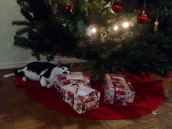 10 Days 'til Christmas