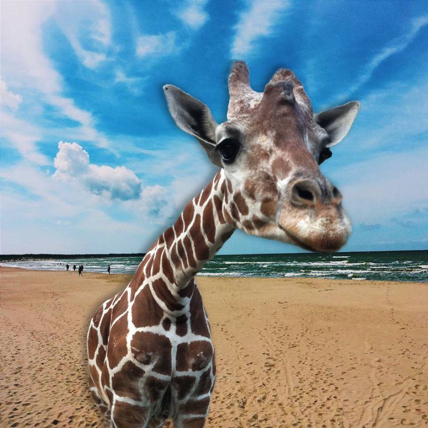 Giraffe By The Sea