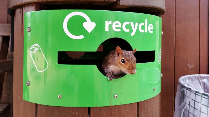 Recycle Everything!