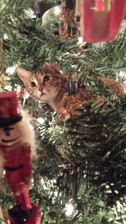 Samantha On Her First Christmas