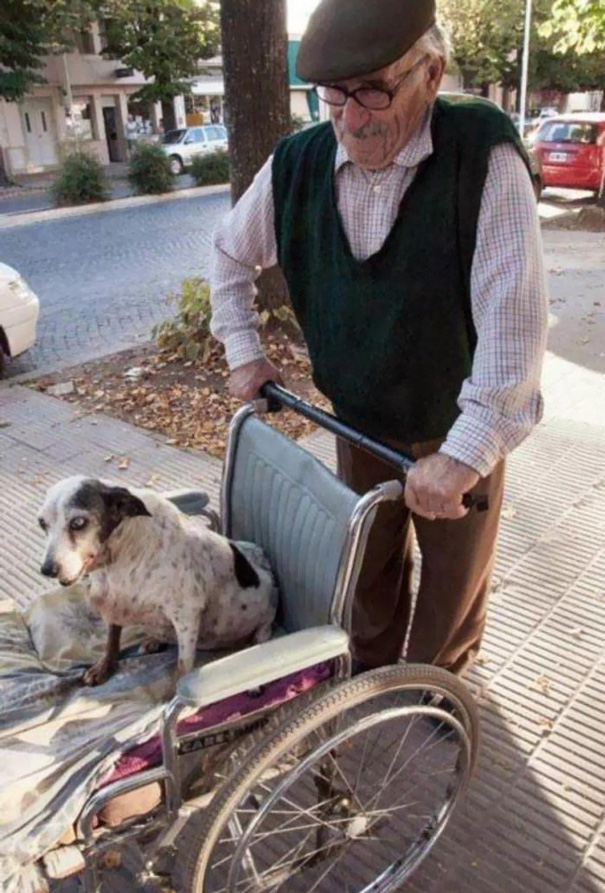 This Guy Has This Dog, And She Can't Walk Anymore. So He Takes Her Out For A Walk Every Day In A Wheelchair