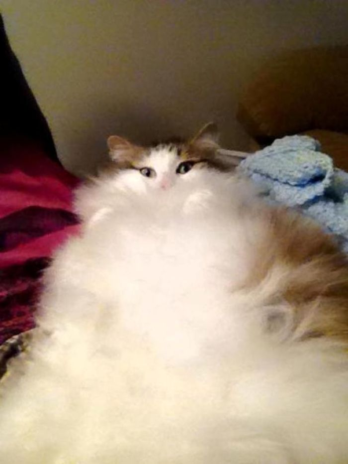 When The Floof Takes Over…