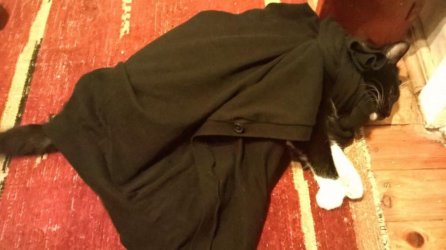 Batcat After Defeating A Furious Shoe Box
