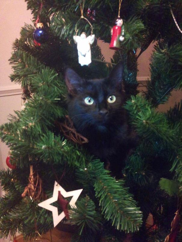Coco's 1st Christmas.