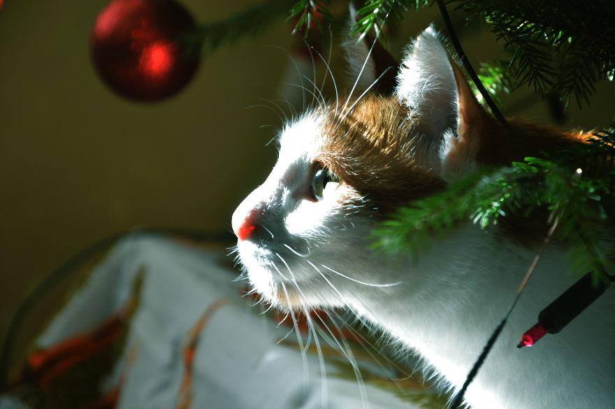 Kožlík O Vánocích.