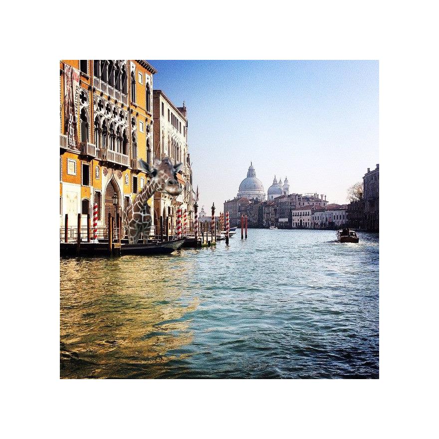 Giraffe In Venice