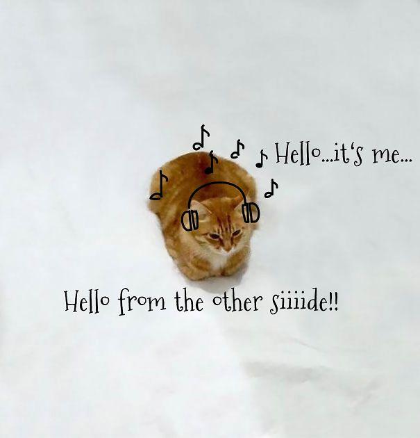 Hello...it's Me!