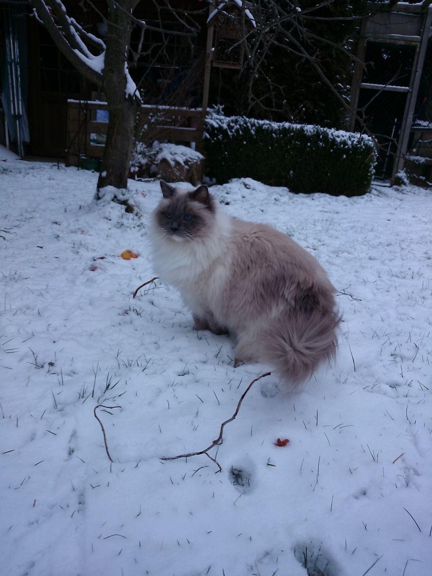 Walking In A Winterwonderland