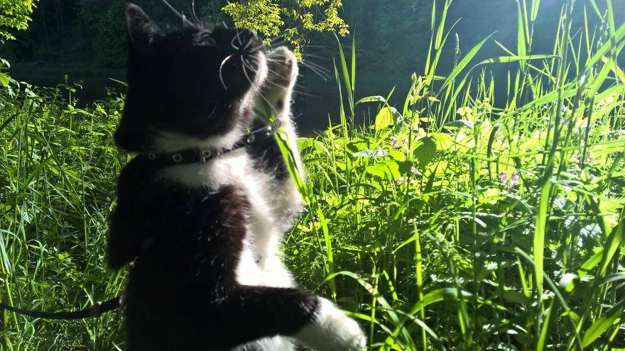 A Look At Cats' Heaven