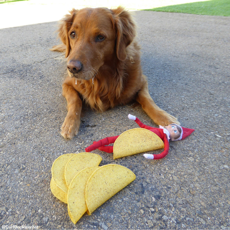 Elf Tacos Make Me Drool