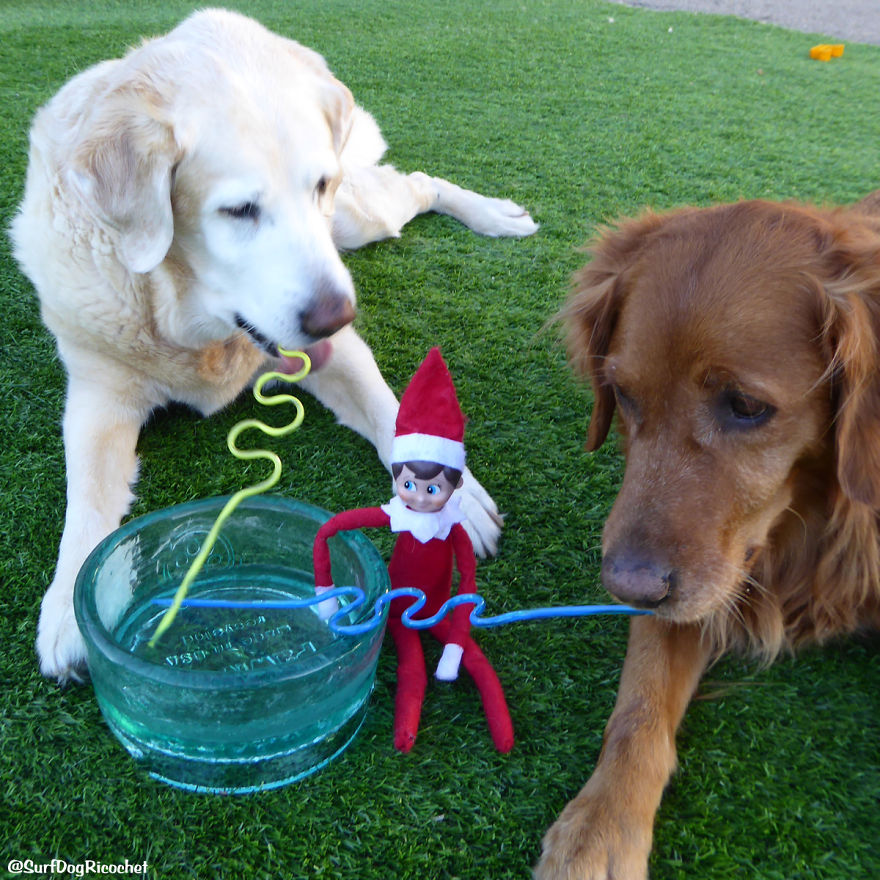My Dogs Are Getting Revenge Against Elf On The Shelf