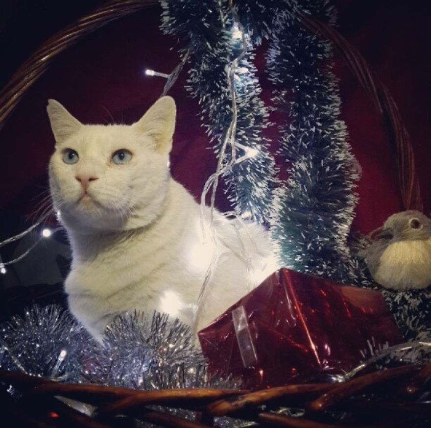 Happy Holidays From Top Model Perseus.