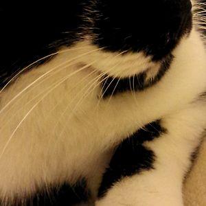 KittyBax