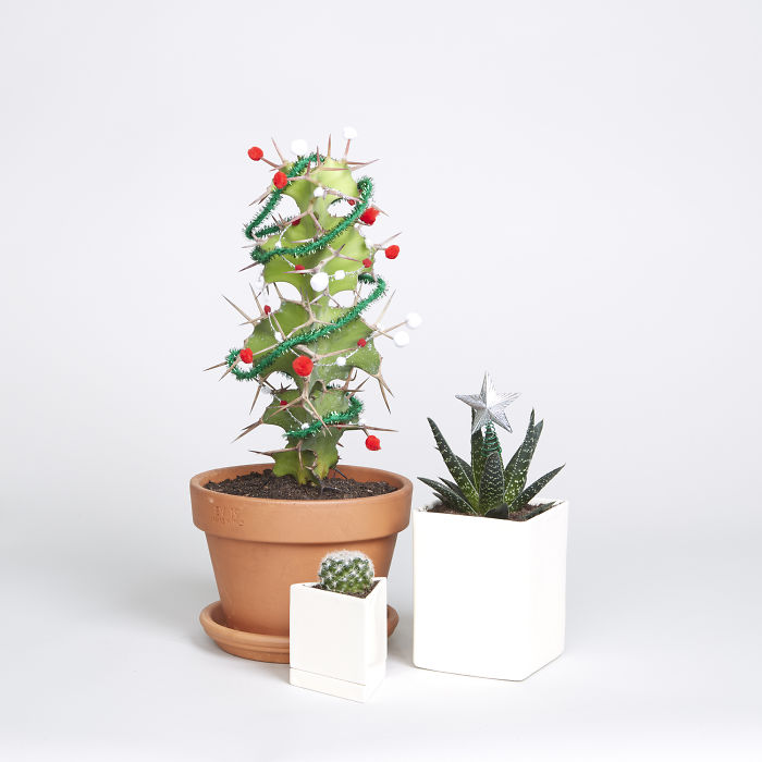 The Sill – Hot Holiday Tree