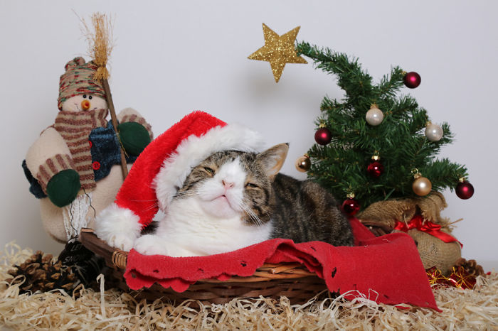 A Happy Christmas For The Homeless Cat No One Wanted