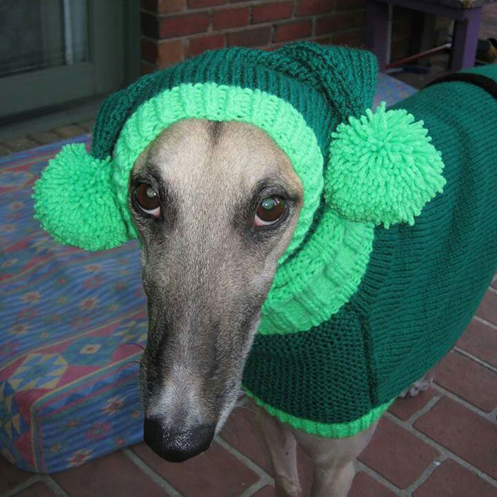 Knitting Patterns For Greyhound Sweaters : Woman Quit Her Job To Knit Sweaters For Cold Abandoned ...