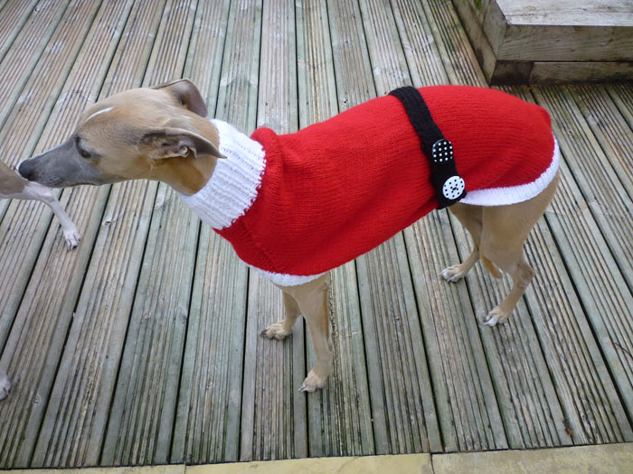 abandoned-greyhounds-christmas-sweaters-knitted-with-love-jan-brown-8