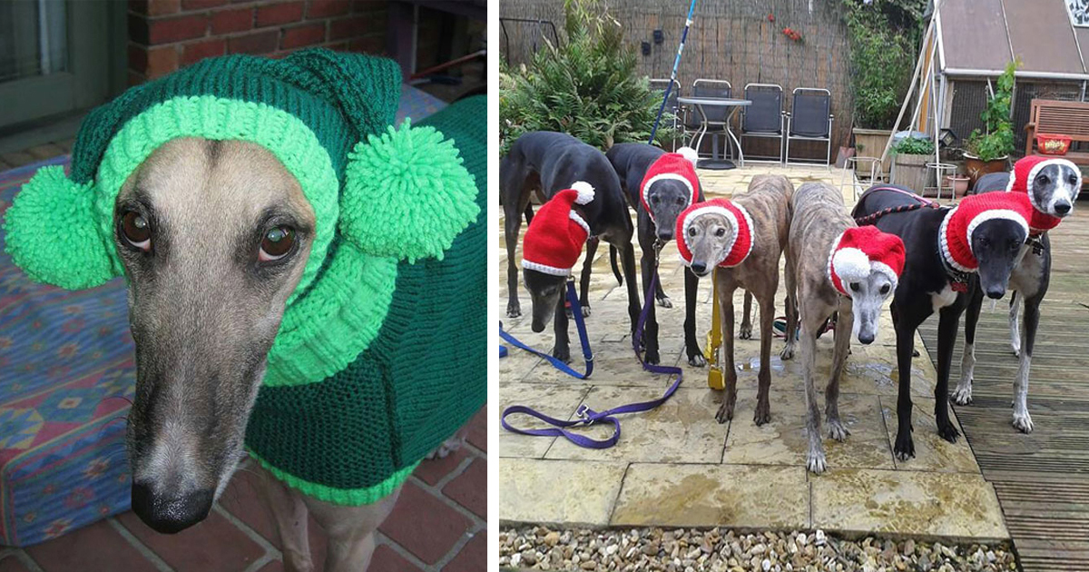 Woman Quit Her Job To Knit Sweaters For Cold Abandoned Greyhounds