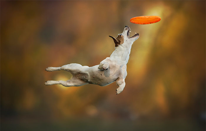 Dogs Can Fly In Funny Photo Series By Claudio Piccoli (25 Pics)