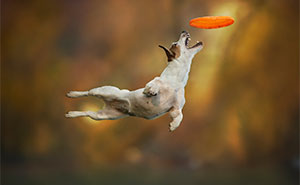 Dogs Can Fly In Funny Photo Series By Claudio Piccoli (20+ Pics)