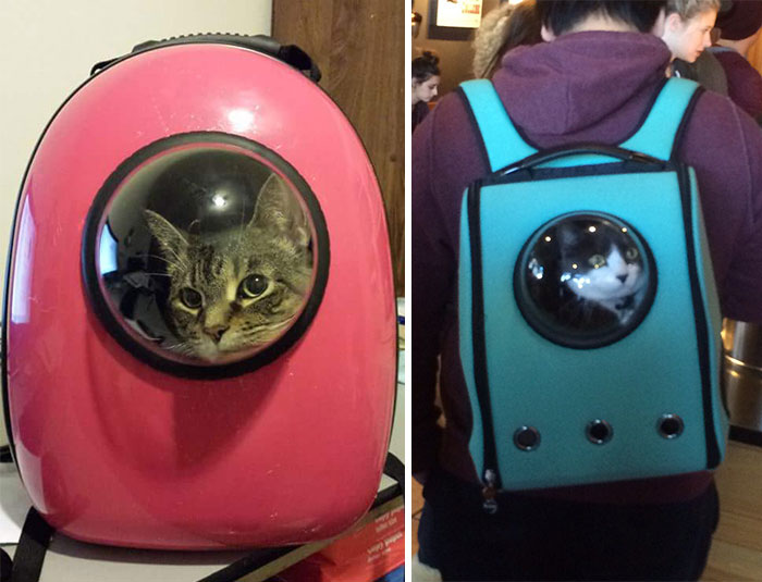 rucsac pentru pisici