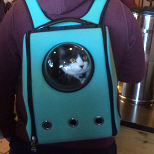Clever Cat-Pack Lets Your Pet Travel Like An Astronaut