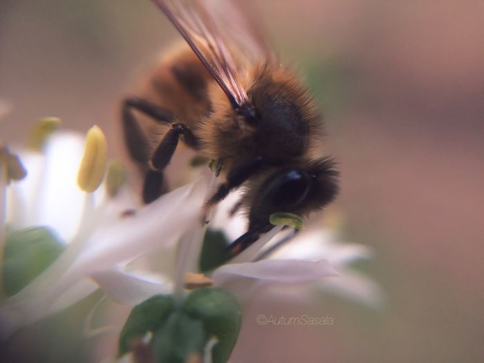 Bee-u-ti-ful!