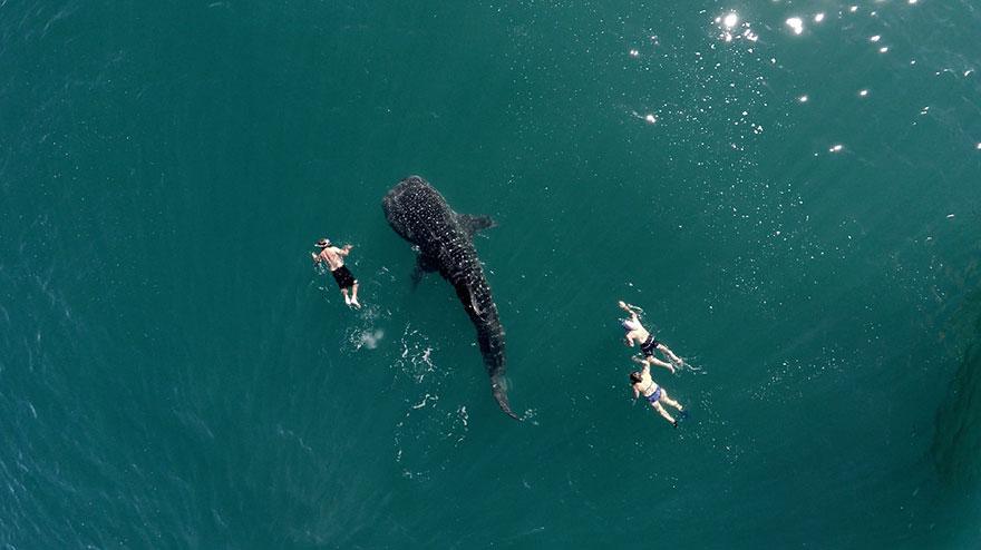 Balena Rechin Și Turiști