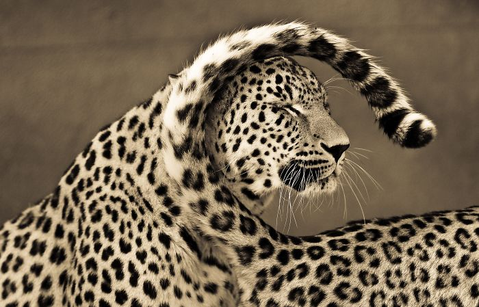 Big Cats: I've Spent 10 Years Photographing These Wild And Loving Creatures