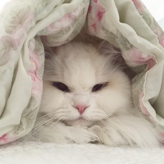 cat-found-side-road-true-fluff-12