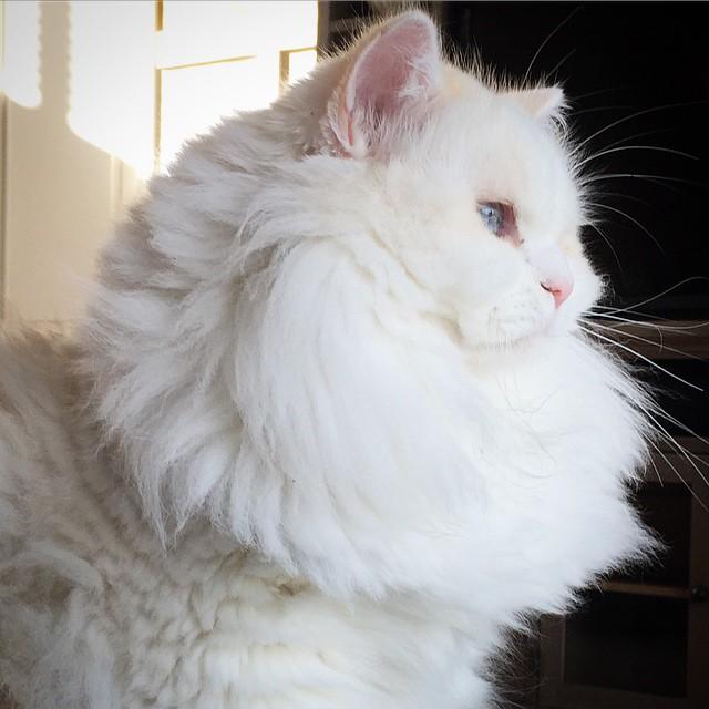 cat-found-side-road-true-fluff-13
