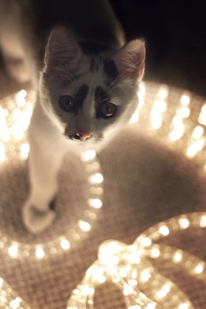 Cat Saw Christmas Lights For The First Time