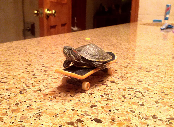 My Sister Bought A Baby Turtle