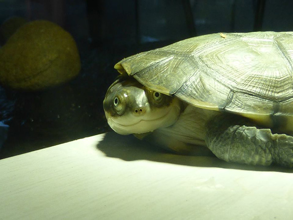 Meet Rizzla, My Turtle Who Is Always Smiling