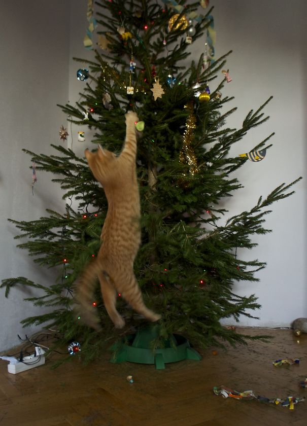 14 undressing the christmas tree - Cat Christmas Decorations