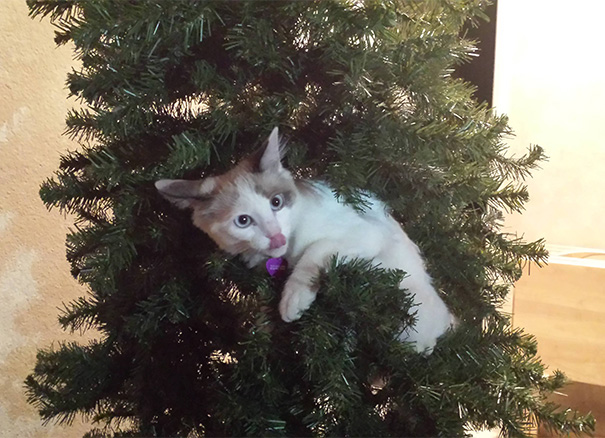 Dani Loves The Tree
