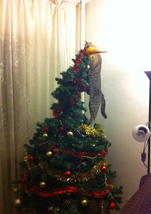 So This Cat Helped With The Christmas Decorations