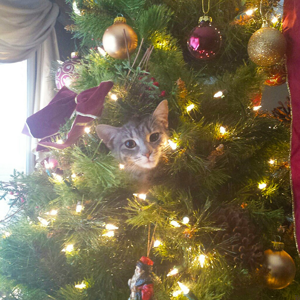 My Kitten Also Loves The Christmas Tree. Doesn't Like The ...