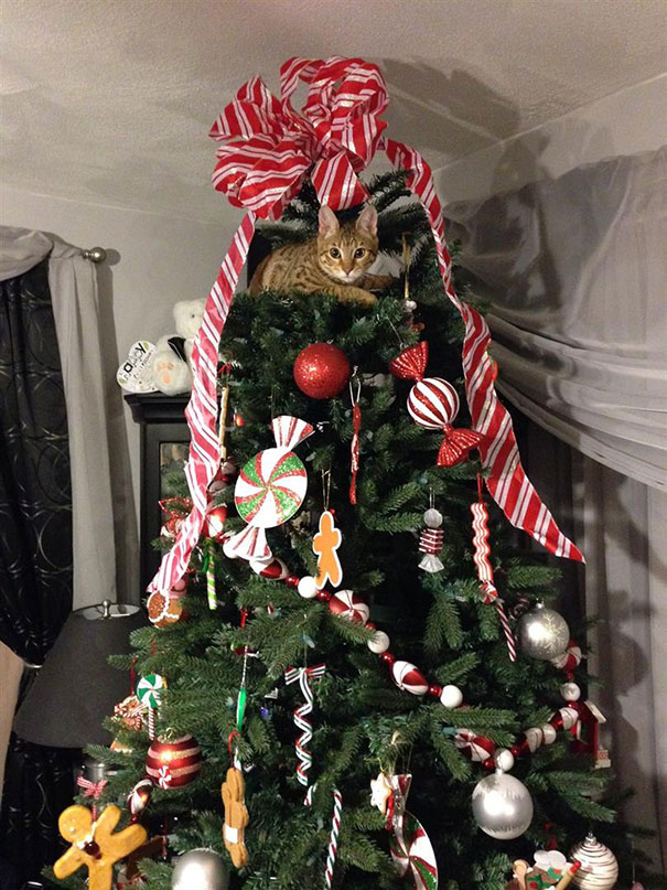 This Tree Is For Me, Right?