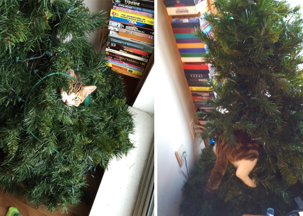 Our Cat Climbed Into Our Undecorated Tree