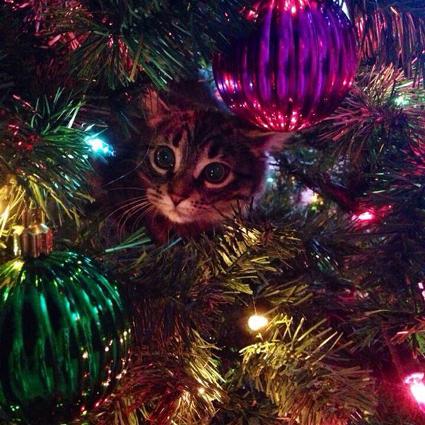 Are Christmas Trees Bad For Cats: 122 Cats Helping Decorate Christmas Trees